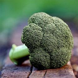 Британские ученые вывели новый сорт брокколи