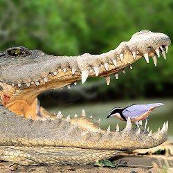 7 феноменальных явлений в животном мире