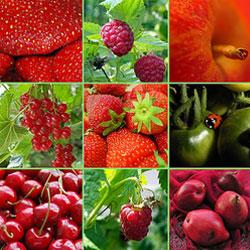 Сколько на самом деле нужно съедать овощей и фруктов в день?