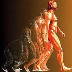 Находки, свидетельствующие об эволюции человека