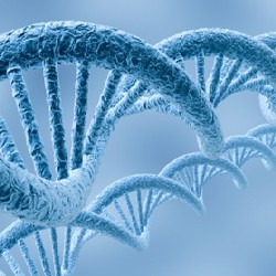 В чувствительности к боли виноваты гены