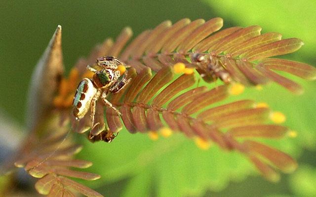 Самые необычные особенности пауков