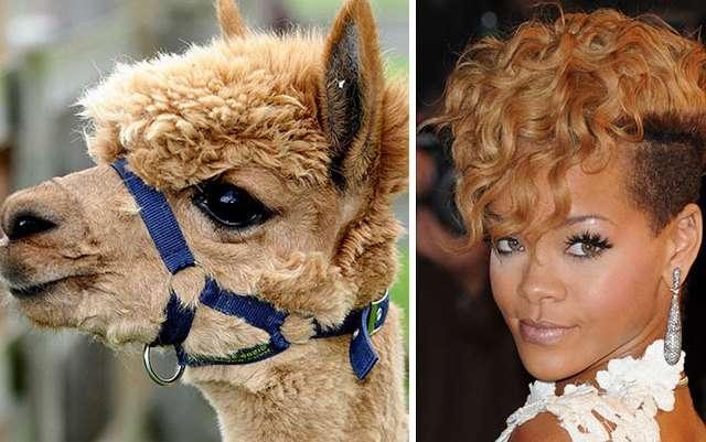 Дети, животные и другие интересности, похожие на знаменитостей