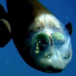 Невероятных глубоководных обитателей