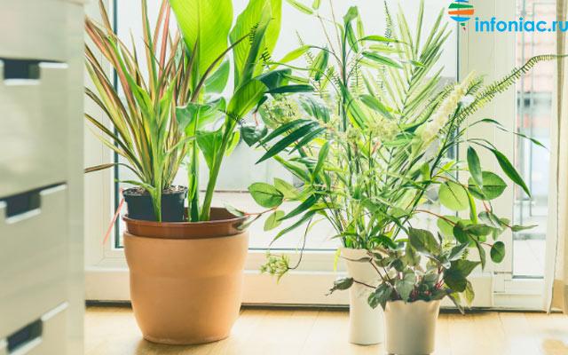 plants0420-11.jpg