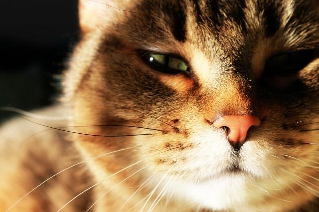 Что ваша кошка думает о вас?