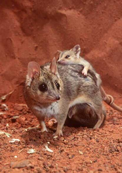 Marsupials2.jpg