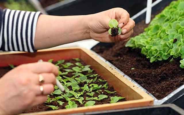 plants0315-25.jpg