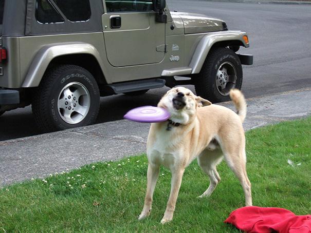 33 фото самых нелепых моментов из жизни собак
