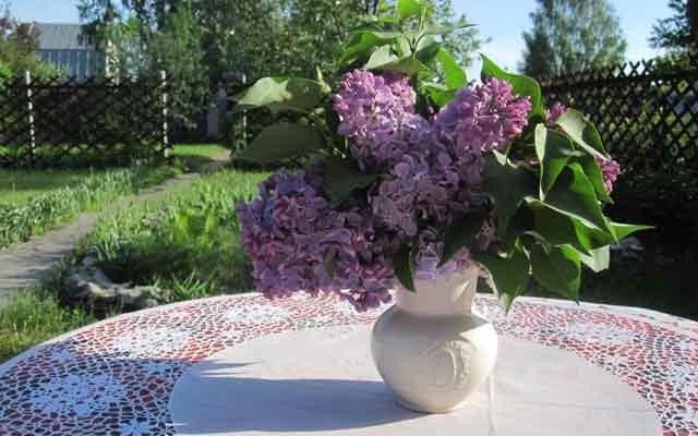 plants0516-15.jpg