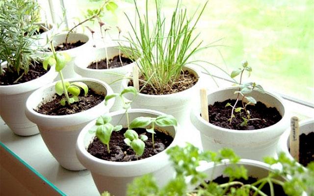 Какие растения вырастить в домашних условиях 433