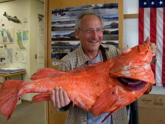 На Аляске поймали самую большую рыбу, которой больше 200 лет