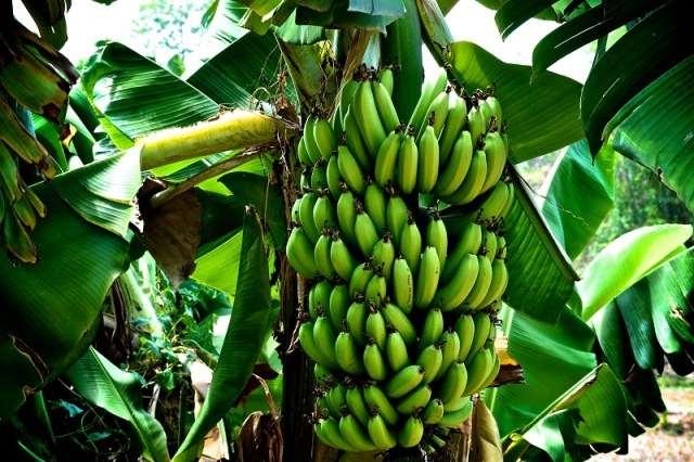fructi-banani-2-2.jpg