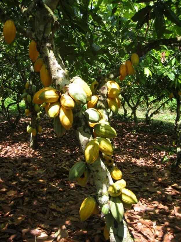fructi-2.jpg