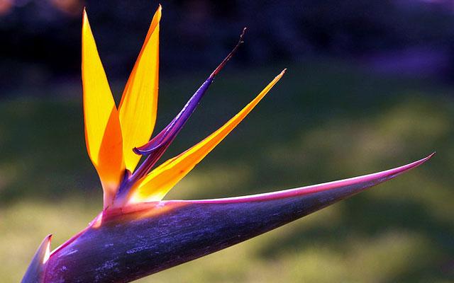 картинки самых красивых цветов: