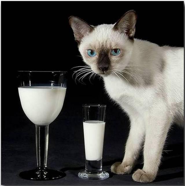 Разоблачение 10 распространенных мифов о кошках