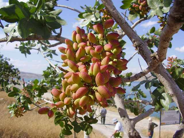 fructi-12.jpg