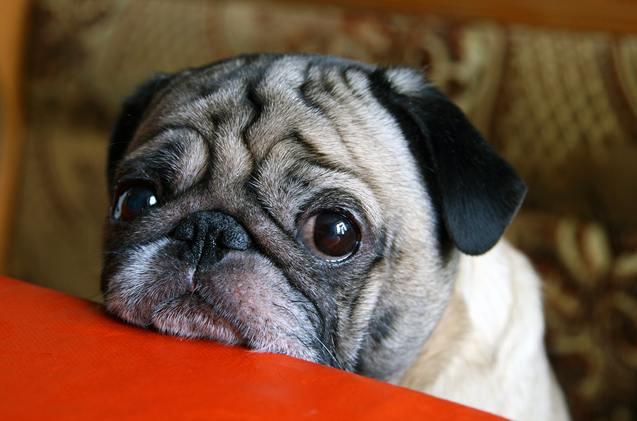 13 удивительных секретов, которые ваша собака знает о вас