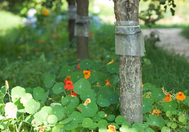 Ловушки на деревья от вредителей