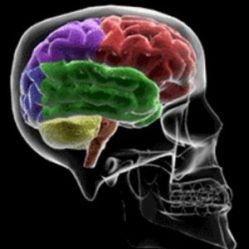 Схема системы, распознающей паттерны активности нейронов, и выдающей звуки речи.  Авторы назвали ее Neuralynx.
