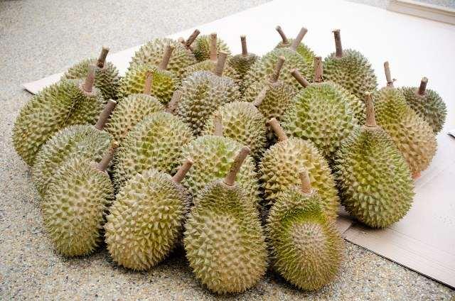 fructi-durian-1-2.jpeg