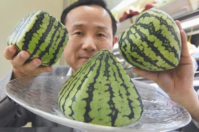 10 интересных фактов об арбузах
