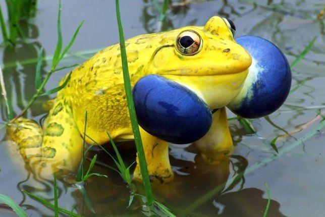 20 животных с расцветкой, которая поразит наше воображение