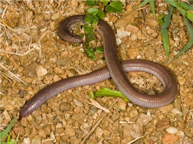 Дождевые черви на даче — источник биогумуса