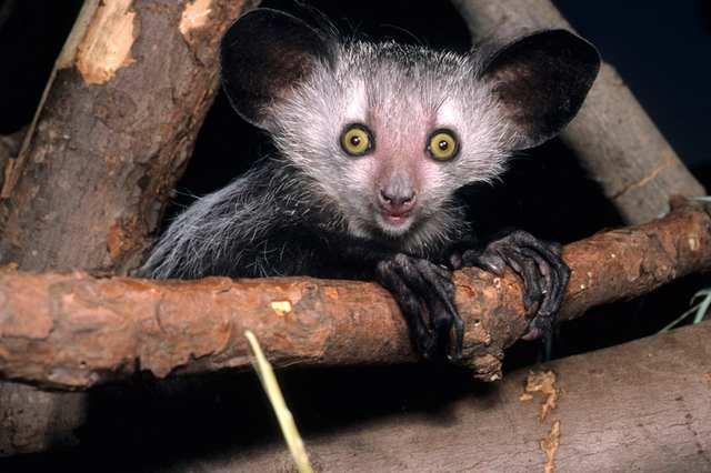 25 пугающих существ, встречающихся в природе