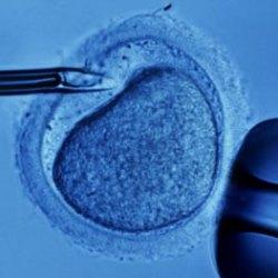 Чьи сперматозоиды используются для эко