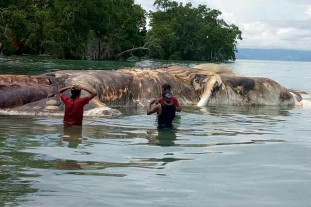 На берег Индонезии выбросило огромного морского монстра