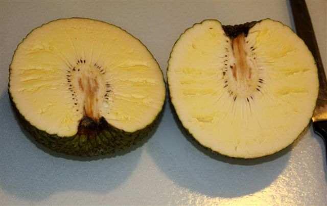fruct-14.JPG