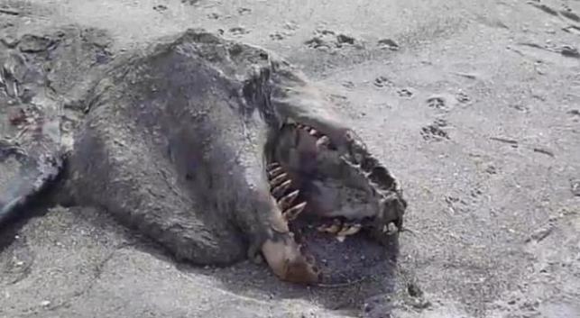 На берег Новой Зеландии выбросило неизвестное морское чудовище
