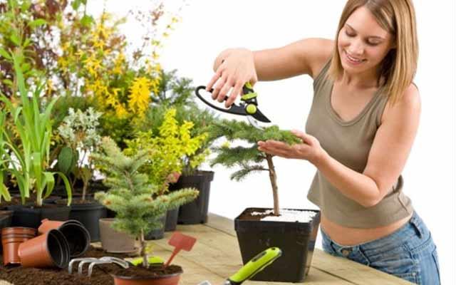 plants0316-12.jpg
