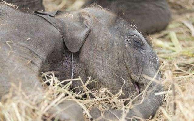 16 странных привычек сна в мире животных