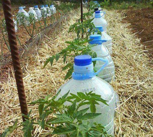 Поливалки своими руками из пластиковых бутылок