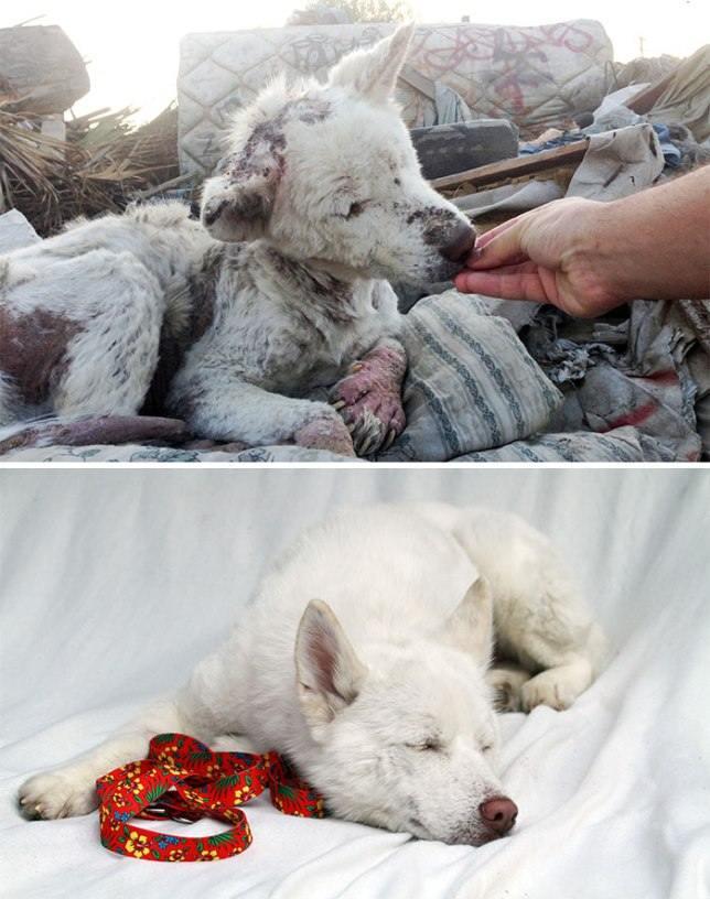 25 фото собак до и после их спасения