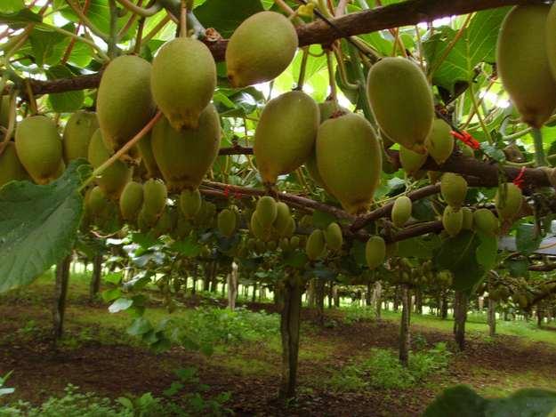 fructi-1.jpg