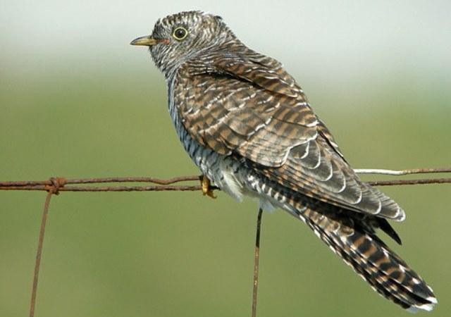 for Oiseaux du sud de la france