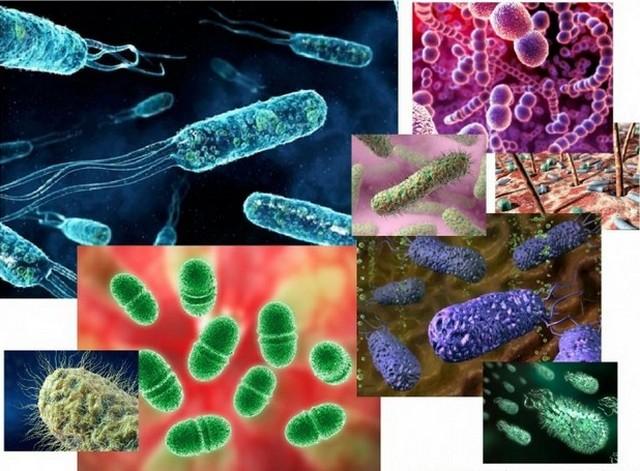 Бактерии в жизни человека и другие факты о человеческом теле.
