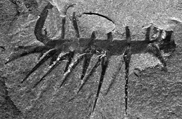 5 удивительных вымерших существ, которые не были динозаврами