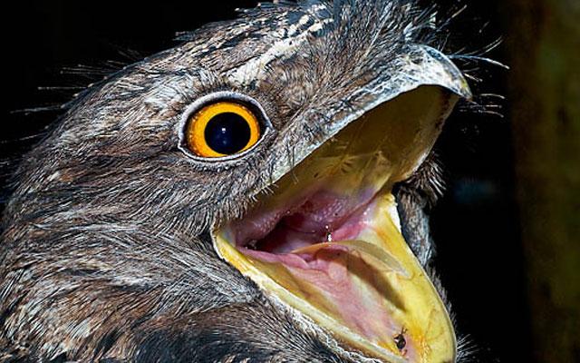 Шокирующее и удивительное поведение птиц