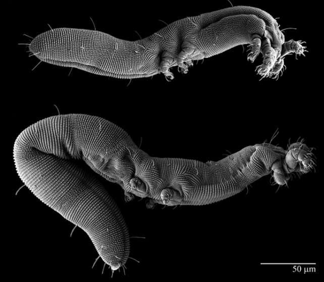 Самые невероятно сложные микроорганизмы