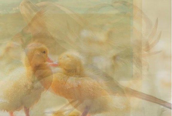 Животное, которое вы видите первым на изображении, может многое о вас рассказать