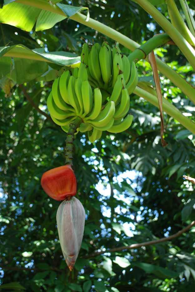 fructi-4.jpg
