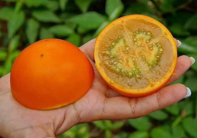 fruct-11.jpg