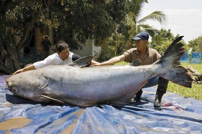 10 гигантских животных: что реально, а что фейк?