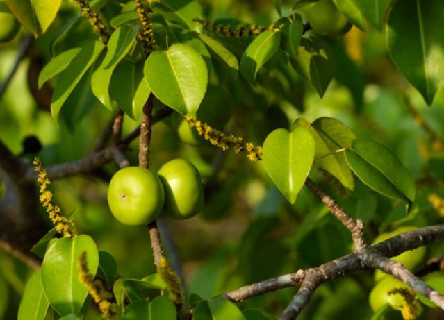 10 самых коварных деревьев и растений