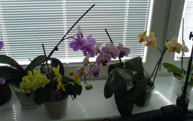 plants0417-19.jpg