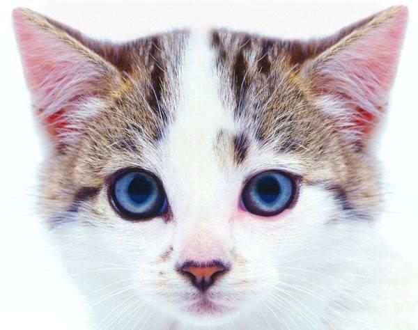 20 любопытных фактов о кошках